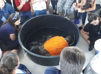 La tartaruga salvata… durante la gita in mare