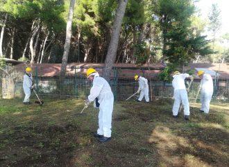 """Taranto, parte il progetto """"Verde Amico"""""""