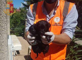 Cani abbandonati in un casolare vicino Martina Franca