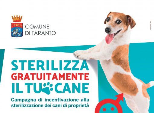 """Taranto, parte la campagna """"sterilizza gratuitamente il tuo cane"""""""