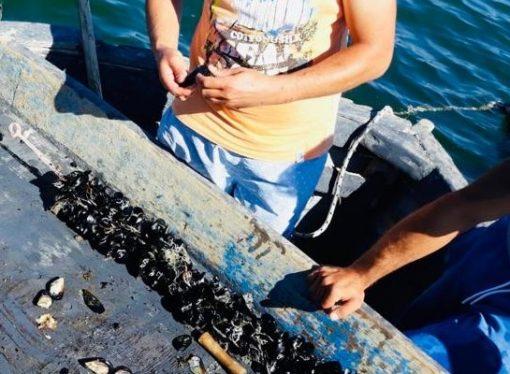 Retine di plastica biodegradabili per le cozze di Taranto