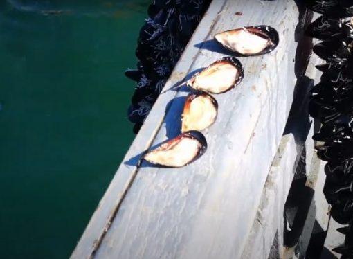 Molluschicoltura, convenzione per la nuova classificazione delle acque