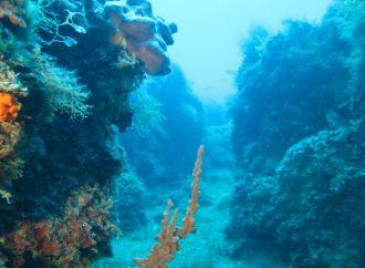 Arpa Puglia, evento online sulla Giornata Nazionale del Mare